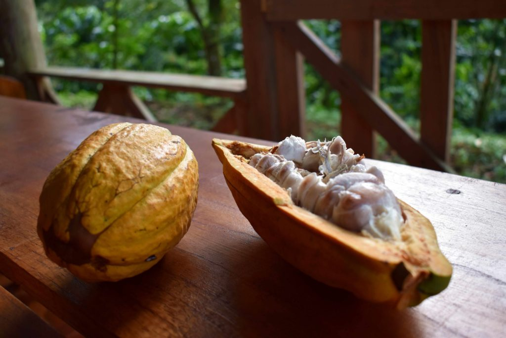 Fèves de cacao slow food costa rica