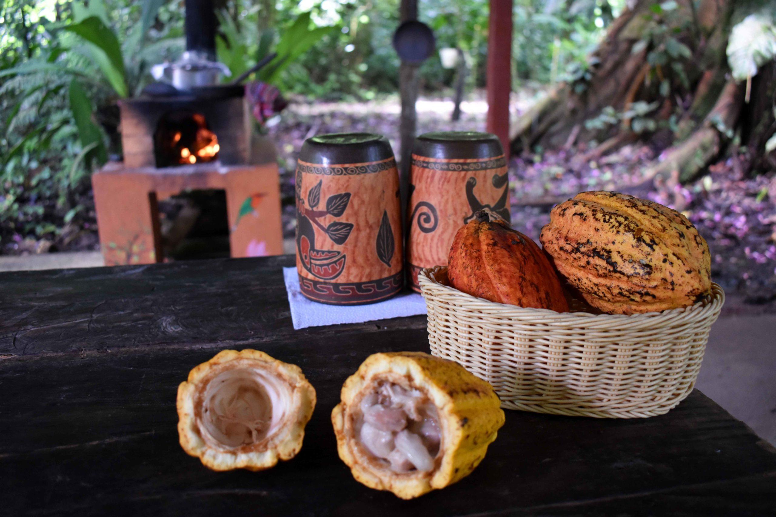 Tour de chocolat Tirimbina Costa Rica