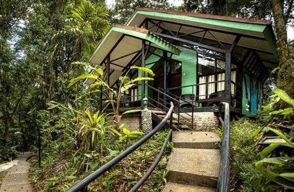 Chambre bungalow Tapirus Lodge