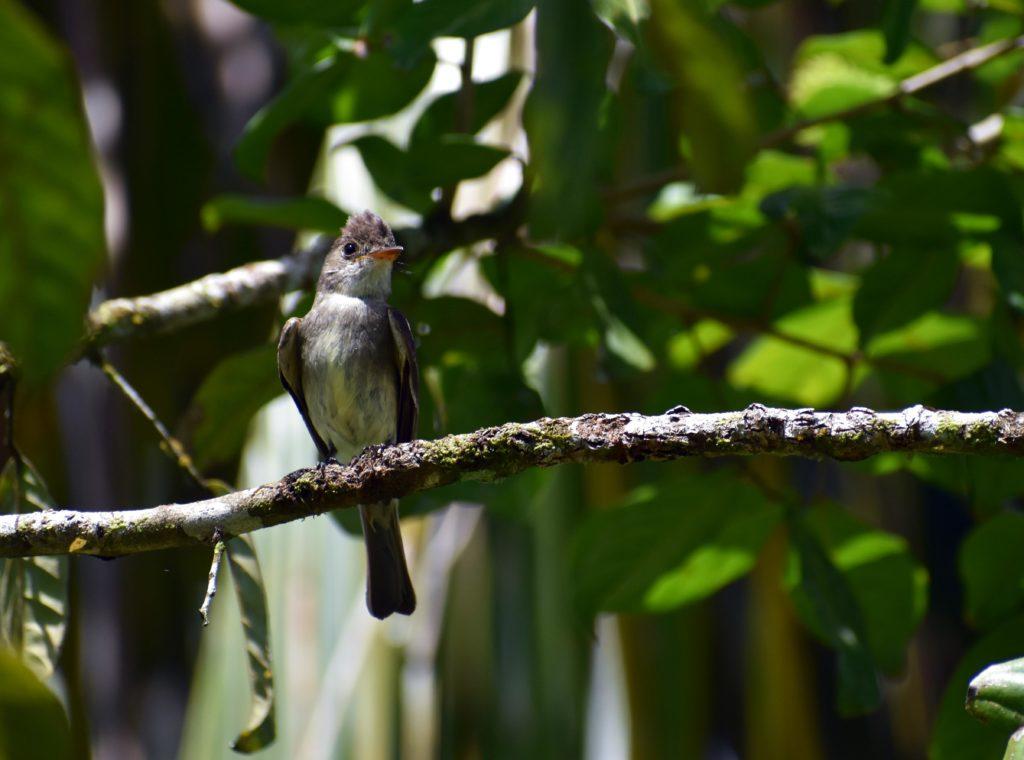 Oiseau bird Tapirus lodge
